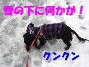 雪の下に何かを発見!