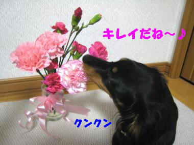 キレイな花だね!