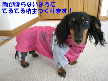 雨よ、降らないで~!
