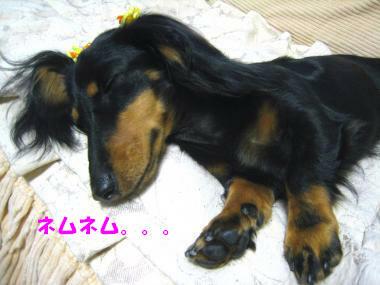 疲れてネムネムです。。。