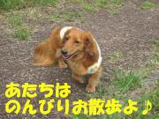 トトちゃん お散歩