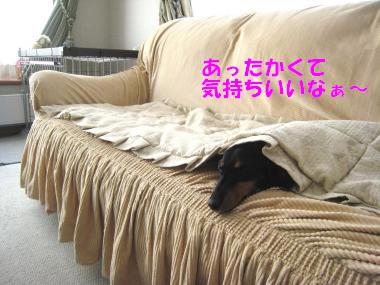 ここで寝るのって気持ちいい♪