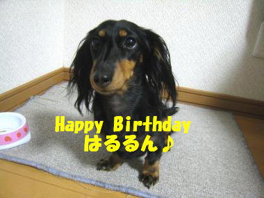 Happy Birthday! はるるん