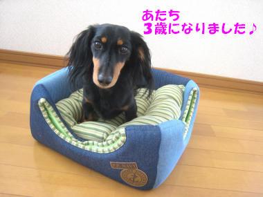 IMG_8555-3.jpg