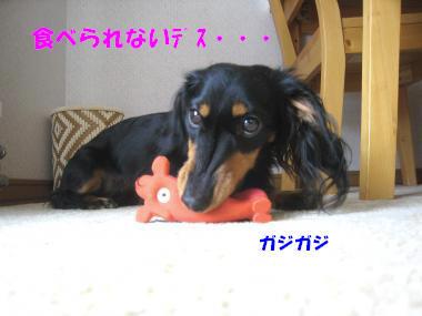 IMG_8654-3.jpg