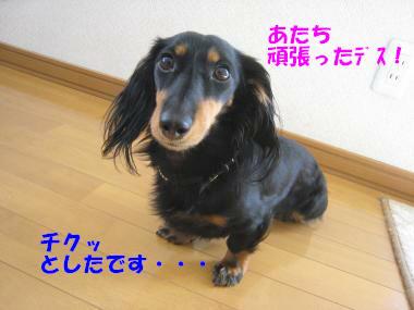 IMG_8768-3.jpg
