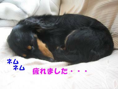 IMG_8801-3.jpg