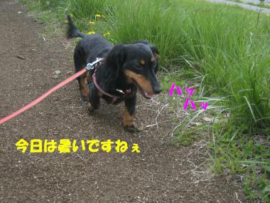 IMG_8896-3.jpg