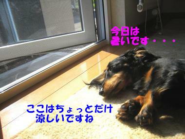IMG_8988-3.jpg