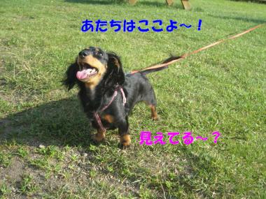 IMG_9080-3.jpg