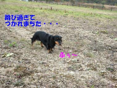 IMG_9256-3.jpg