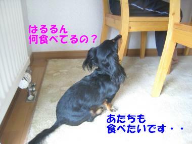 IMG_9305-3.jpg