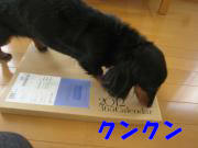 IMG_9385-3.jpg