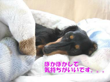 IMG_9504-3.jpg