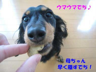 IMG_9520-3.jpg