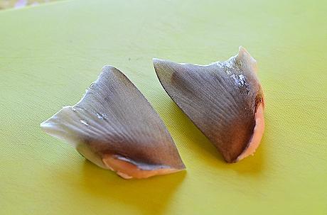 サメのヒレ2