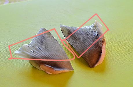 サメのヒレー2