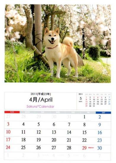 2011さくらカレンダー4月A
