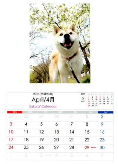 2011さくらカレンダー4月B