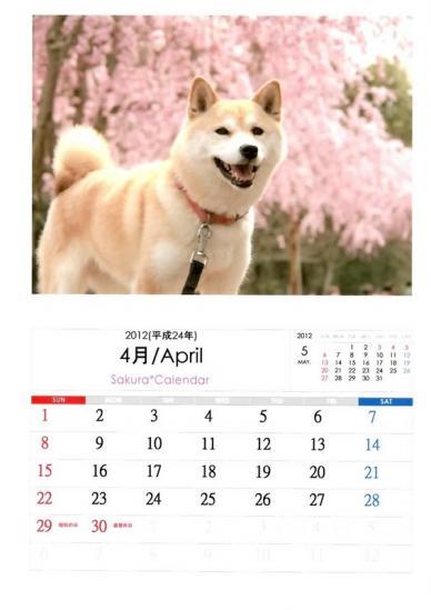 4月さくらカレンダーA