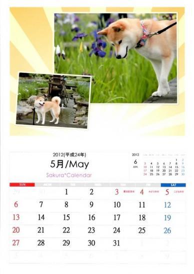 5月さくらカレンダーA