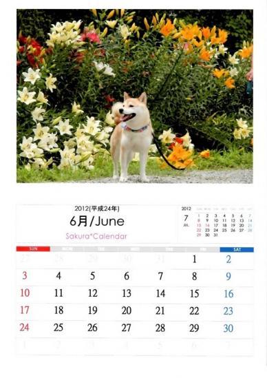 6月さくらカレンダーA
