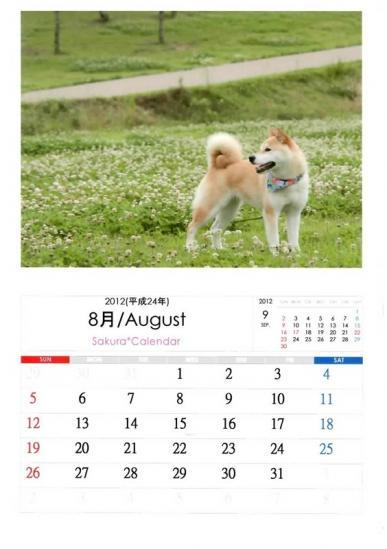 8月さくらカレンダーA