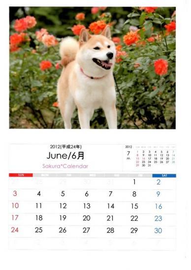 6月さくらカレンダーB