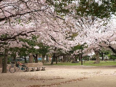 満開の西武庫公園