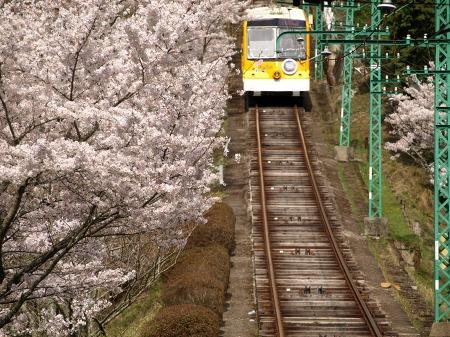 満開の桜の中を!!