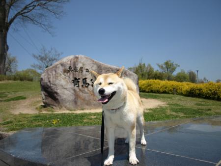 有馬富士公園~さくら