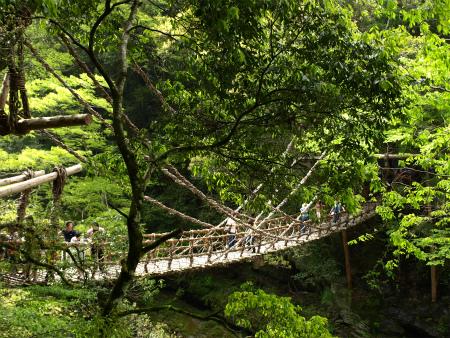 緑の中のかずら橋