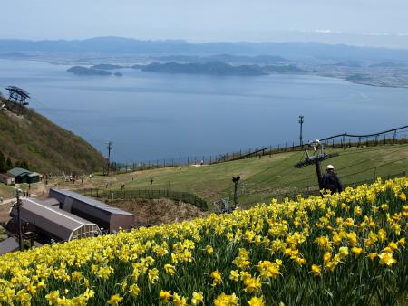 琵琶湖と水仙