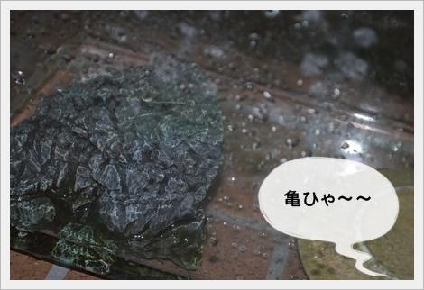 DSC_0001_20110605202122.jpg