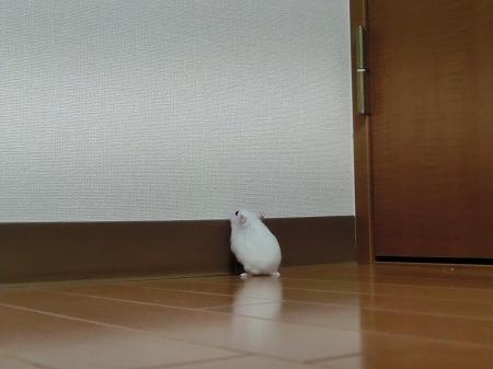はんたっち~