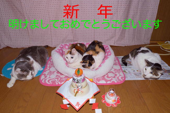 ネコたちの新年挨拶ブログ2