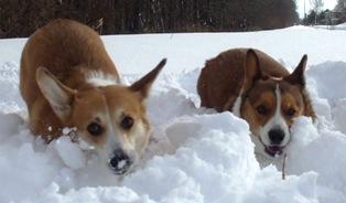 雪の中のりんとカイ
