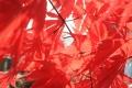 秋の散歩10