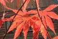 秋の散歩9