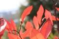 秋の散歩7
