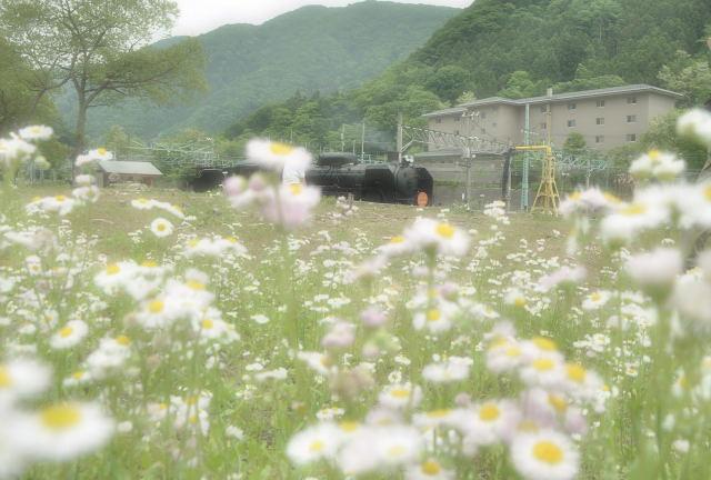 110612himejion1_2.jpg