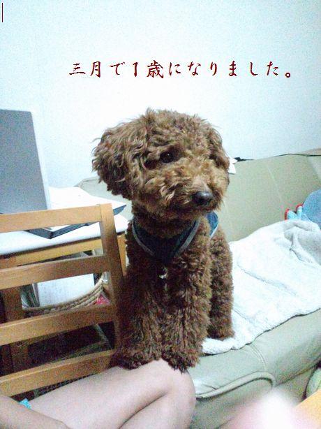 2010_0519いろいろ0201