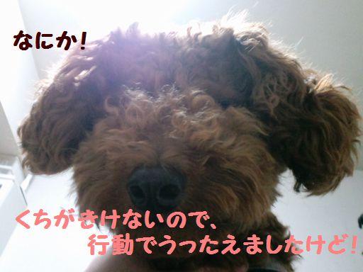 2010_05225、220007ぶろぐ