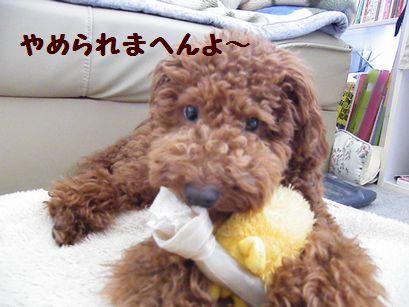 2010_06026月2日0003ぶろぐ