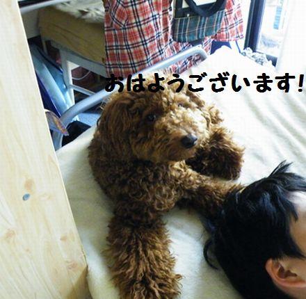 2010_06106月10日0014ぶろぐ