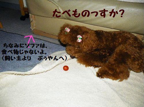 2010_06176月17日0002ぶろぐ