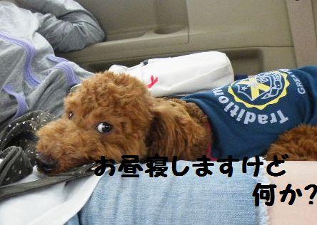 2010_0815浅草0014