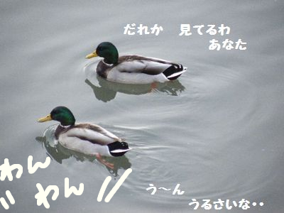 2010_110611月3日0031