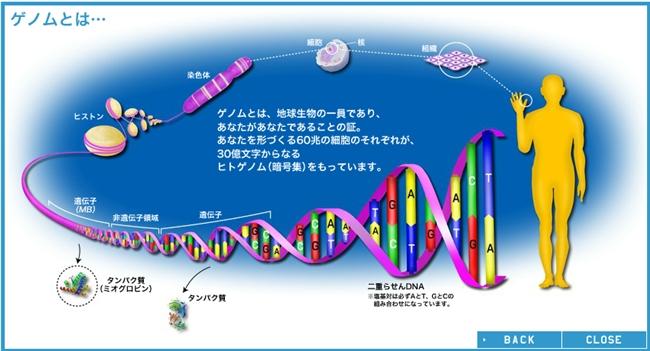 GENOME MAP│ヒトゲノムマップ