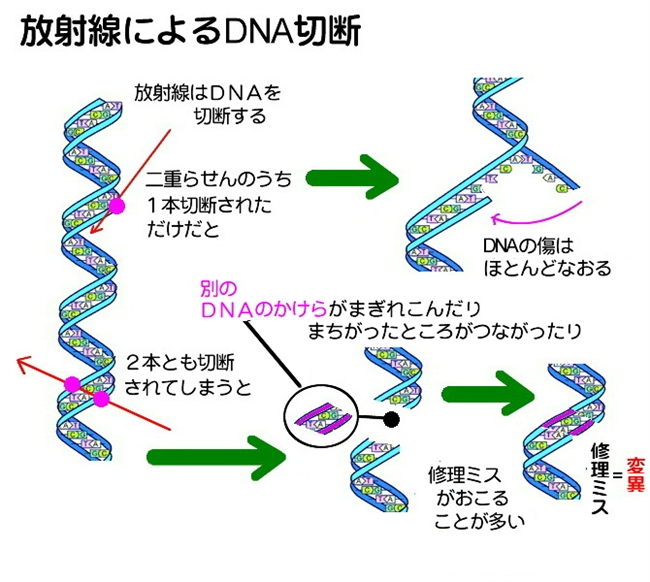 DNA cutting (1)
